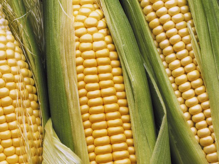 Ésszerűtlen a bioüzemanyag